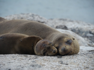 Best way to see Galapagos, by cruise so you can see these cute sea lions! TravelEater.net
