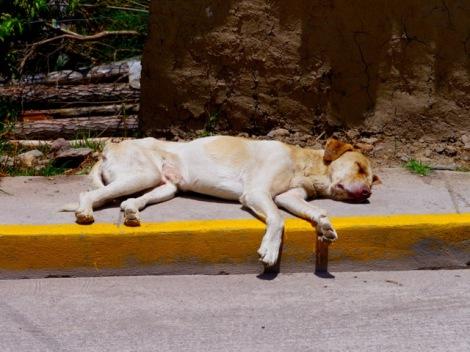 Exhaustion dog Peru Johanna Read TravelEater.net.JPG