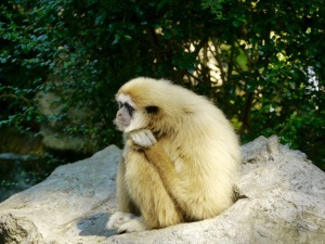 You don't have to suffer in silence like this gibbon in Thailand. Seek help.