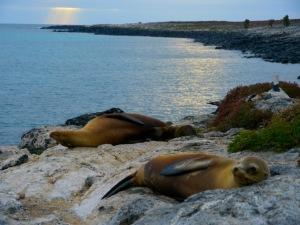 Perfect sunrise, Galapagos.