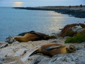 Perfect sunrise, Galapagos.