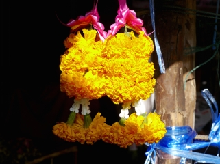 Buddhists buy marigolds to place as offerings at holy sites. Photo (small) by Johanna Read
