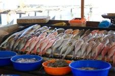 Kochi-India-fish-market copy