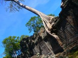 Preah Khan tree. Photo by Johanna Read TravelEater.net