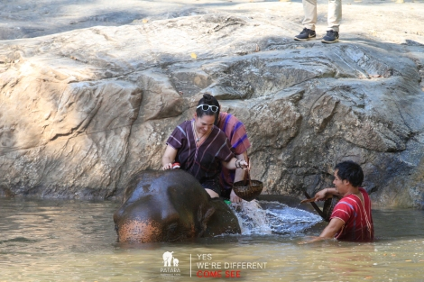 Thailand. Johanna Read bathing an elephant. Photo by Patara Elephant Farm.